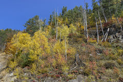 As cores do outono Fotos de Stock