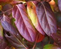 As cores do outono apresentaram toda fotografia de stock royalty free