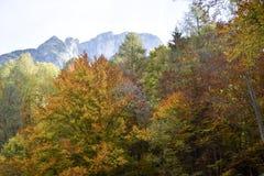 As cores mornas do outono Imagem de Stock