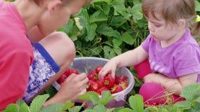 As crianças classificam para fora morangos na cubeta no jardim junto video estoque