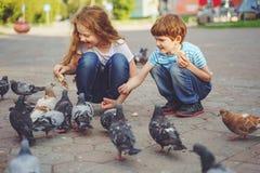 As crianças estão alimentando pombos com pão na rua fotos de stock