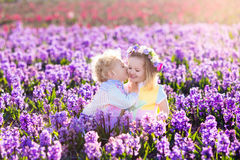 As crianças que jogam no jardim de florescência com jacinto florescem Fotos de Stock Royalty Free