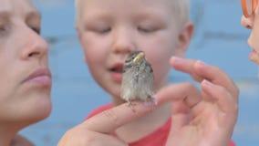 As crianças travaram o pardal e olharam-no em suas mãos O conceito do respeito para a natureza e os animais video estoque