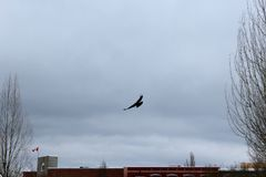 As the crow flies stock photography
