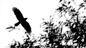 As The Crow Flies Royalty Free Stock Image