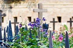 As cruzes do cemitério velho fotografia de stock