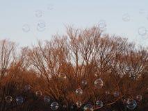 As dúzias das bolhas travaram na luz solar do parque apenas aproximadamente para estourar Imagem de Stock