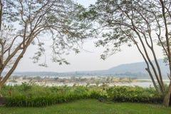 As duas árvores que inclinam-se para se no gramado Foto de Stock