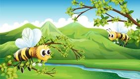 As duas abelhas de voo Imagens de Stock