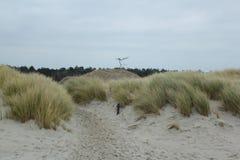 As dunas com grama na costa do Mar do Norte em Zeeland nos Países Baixos imagens de stock