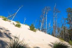 As dunas moventes no parque nacional de Slowinski, Polônia O dun Fotos de Stock Royalty Free