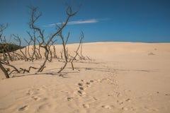 As dunas moventes no parque nacional de Slowinski, Polônia O dun Foto de Stock Royalty Free