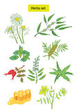 As ervas ajustadas entregam ilustrações desenhadas Imagens de Stock