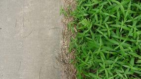 As ervas daninhas da borda da estrada e as estradas do cimento formam um contraste afiado foto de stock