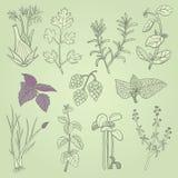 As ervas entregam desenhado Foto de Stock