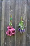 As ervas médicas florescem o grupo, o hyssop de anis e o coneflower fotos de stock