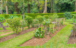 As ervas medicinais no jardim botânico Fotos de Stock Royalty Free