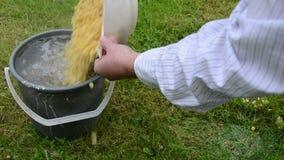 As ervilhas quentes recentemente fervidas derramam a grama plástica da água fria da cubeta video estoque