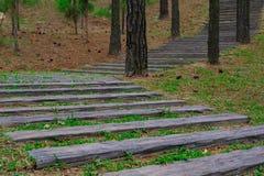 As escadas de madeira estendem nas madeiras Imagem de Stock