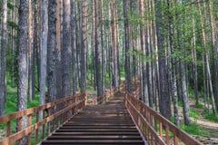 As escadas de madeira na paisagem estacionam Stolby, perto de Krasnoyarsk Imagens de Stock Royalty Free