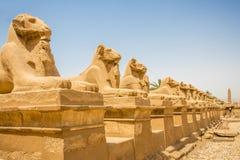 as esfinges RAM-dirigidas alinham a estrada fora do templo em Karnak, Egito fotos de stock royalty free