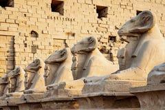As estátuas do Ram na frente do templo de Karnak, Luxor, Egito fotografia de stock royalty free