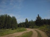 As estradas transversaas na floresta Imagens de Stock