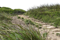 As etapas que conduzem ao grande oceano andam em Victoria Australia Fotos de Stock