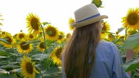 As férias de verão rurais, o adolescente nos vidros e o chapéu de palha andam no campo de girassóis de florescência na luz ensola filme