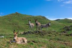 As famílias dos cavalos na montanha pastam com pouco  fotos de stock