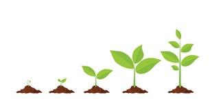 As fases plantam o crescimento ilustração do vetor