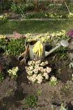 As ferramentas de jardim entre a mola florescem o vertical Imagens de Stock