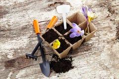 As ferramentas de jardim trabalham com pá, ajuntam, potenciômetros da turfa no fundo de madeira Imagens de Stock