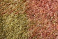 As fibras de lãs fecham-se acima Fotos de Stock Royalty Free