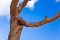 As figuras criadas pela natureza fora da madeira gostam de animais Foto de Stock Royalty Free