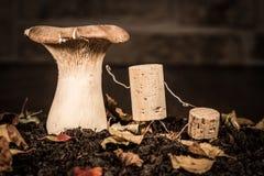 As figuras da cortiça do vinho, pai do conceito explicam o conhecimento fungoso fotografia de stock