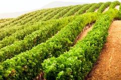 As fileiras de diminuição do vinhedo colocam em França do sul Imagem de Stock