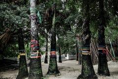 As fitas coloridos envolvidas em torno das árvores santamente e sagrados aproximam o templo budista em Tailândia fotos de stock
