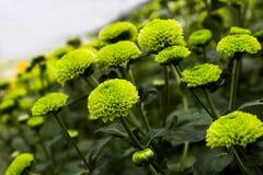 As flores Imagem de Stock