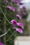 As flores Imagens de Stock