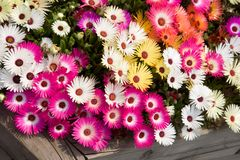 As flores abstratas do fundo são mais sumário o desenho uma flor natural Imagens de Stock