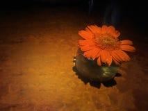 As flores alaranjadas na tabela com um ponto alaranjado iluminam-se Fotos de Stock Royalty Free