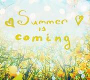As flores amarelas sobre a luz solar e o céu com verão escrito à mão da rotulação estão vindo, vista da parte inferior, natureza  Fotografia de Stock Royalty Free