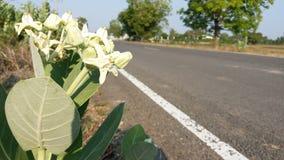 As flores ao longo do caminho, ninguém importam-se imagens de stock royalty free