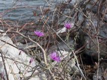 As flores aproximam a água Fotos de Stock