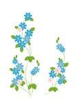 As flores azuis de esquecer-mim - Ilustração do Vetor