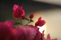 As flores bonitas com ideias do por do sol do lago molham no fundo fotografia de stock