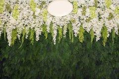 As flores bonitas com samambaia verde saem do fundo Beautif da parede Imagem de Stock Royalty Free