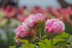 As flores bonitas crescem acima no parque Imagens de Stock