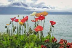 As flores bonitas crescem o lago e montanhas próximos Imagem de Stock